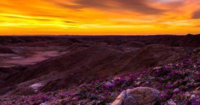 9 magische Fotos von Kaliforniens blühenden Wildblumen