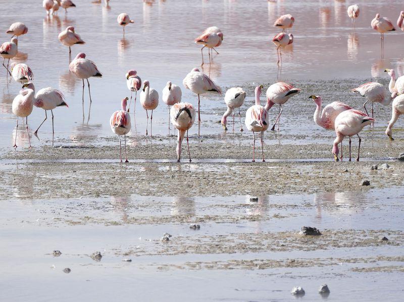 Bolivien: Ein Traumland für Naturliebhaber