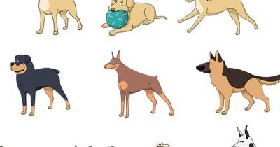 Das ist die beliebteste Hunderasse in Deutschland!