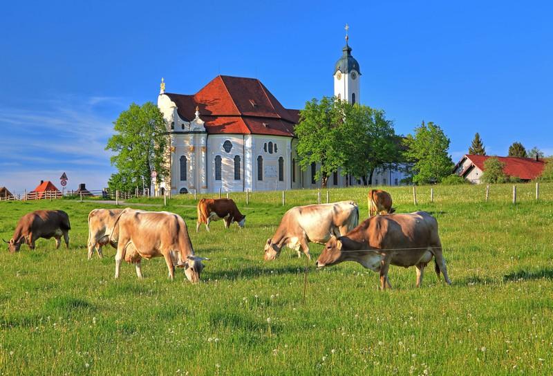 """Die Wieskirche in den Ammergauer Alpen heißt eigentlich """"Wallfahrtskirche zum Gegeißelten Heiland auf der Wies""""."""