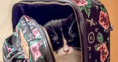 Katze im Gepäck? So transportierst du dein Haustier richtig!