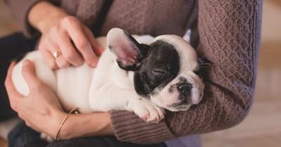 Bei EasyJet gibt es jetzt gratis Haustier-Sitter