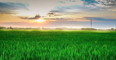 Sechs der grünsten Landschaften der Welt