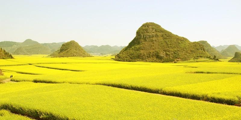 Auch die Rapsfelder in der Provinz Yunnan sind eine echte Sehenswürdigkeit!