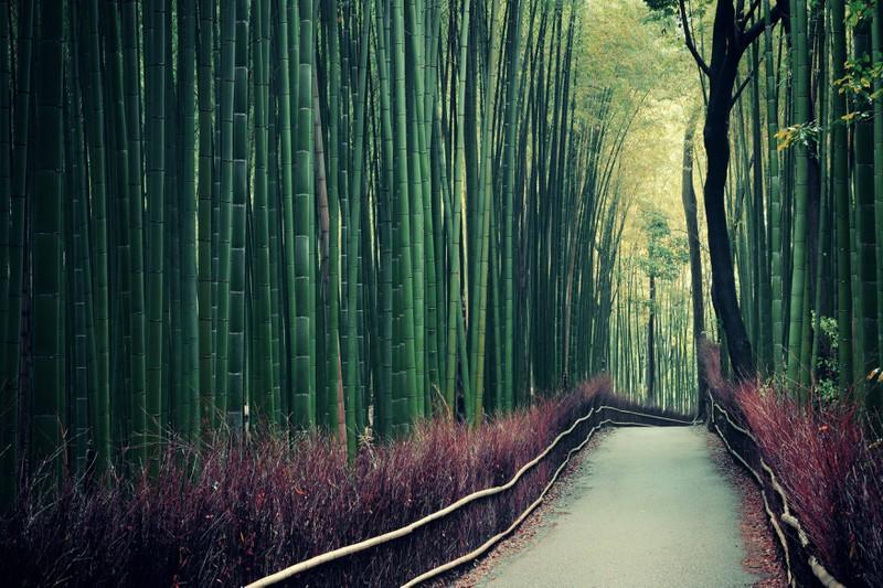 Der Bambuswald in Arashiyama ist eine echte Sehenswürdigkeit!