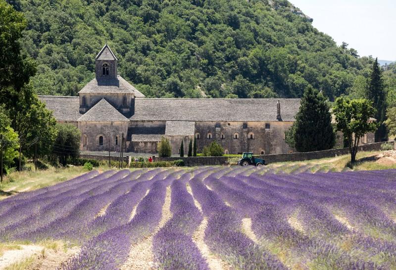 Die Lavendelfelder in Frankreich sind eine echte Sensation!