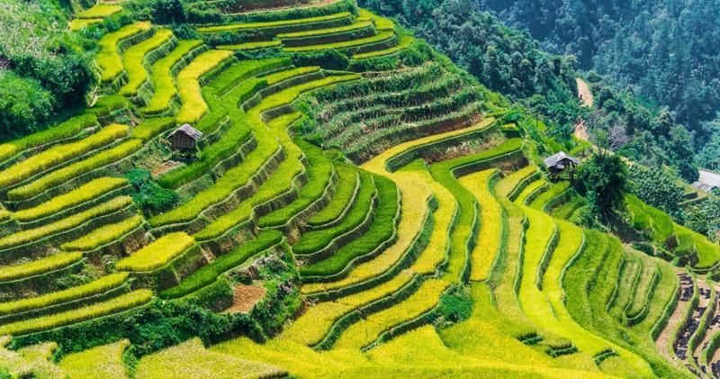 Die terassenförmigen Reisfelder in Vietnam sind wirklich sehenswert!