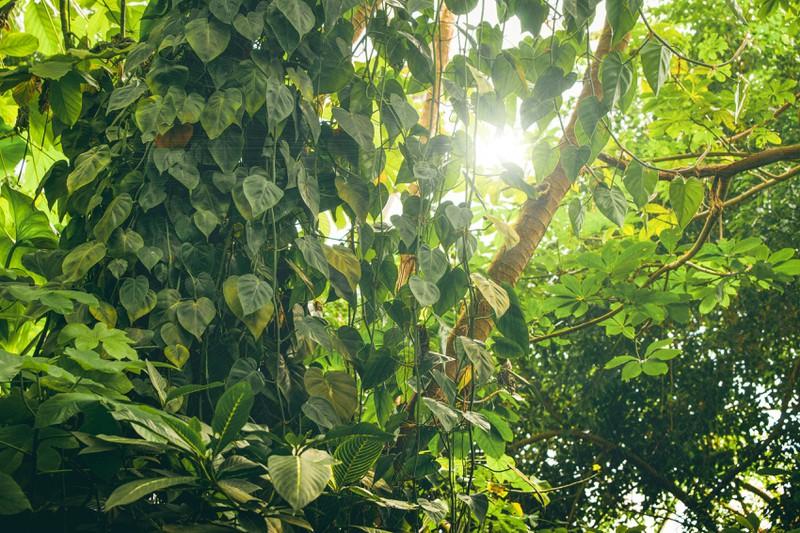 Der Regenwald des Amazonas hat einiges an Pflanzen zu bieten.
