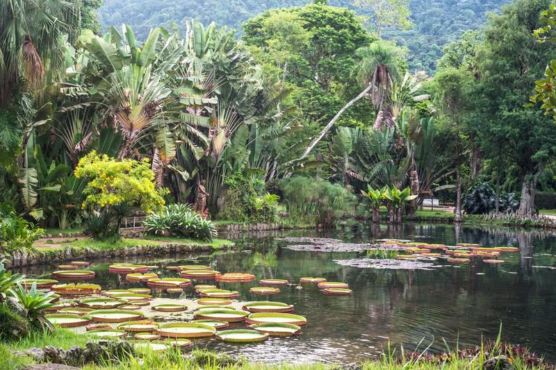 Der Botanische Garten von Rio de Janeiro