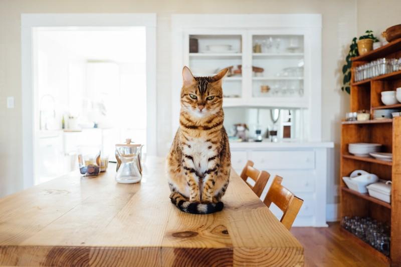 Katze, die in der Küche sitzt