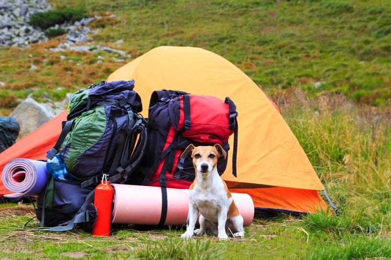Hund bewacht ein Zelt mit Rucksäcken