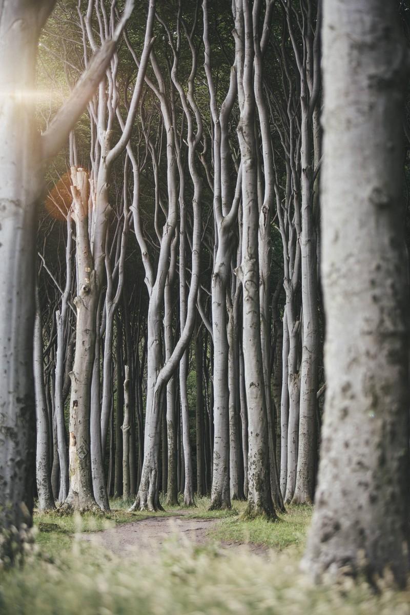 Der Gespensterwald Nienhagen gehört zu den gruseligen Orten in Deutschland.