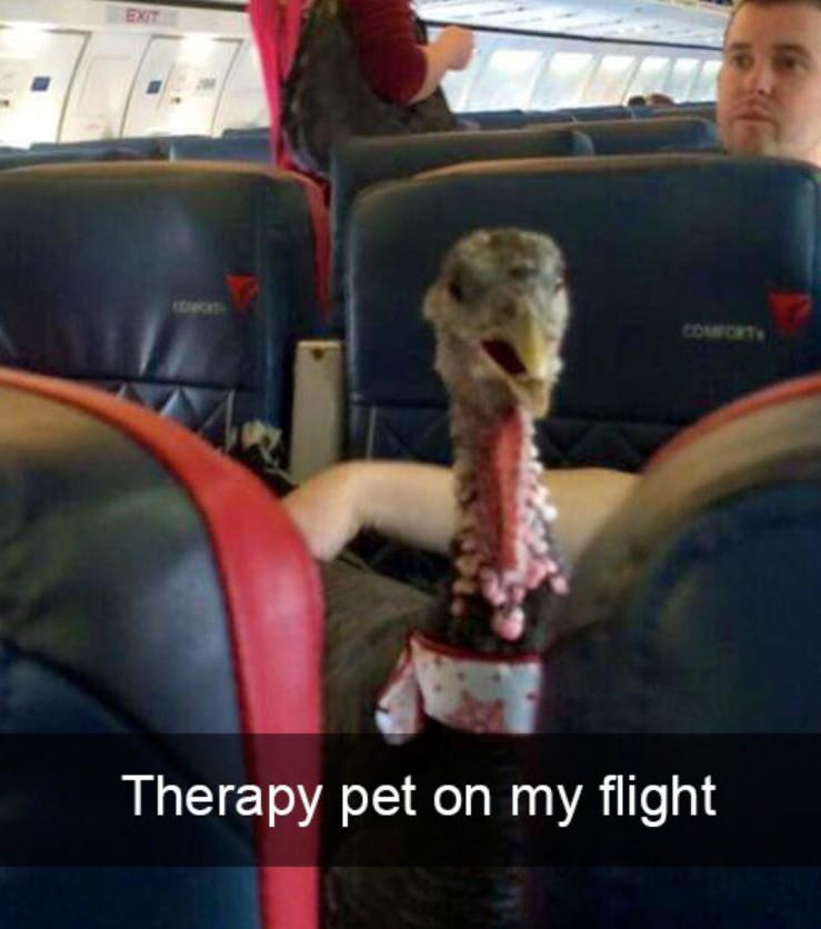 Diese tierische Begleitung hat auch therapeutische Funktionen.