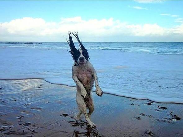 Dürfen Hunde nicht am Strand spazieren?