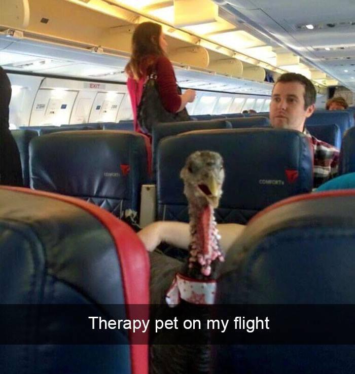 Hier wurde ein verrücktes Foto von einem Truthahn im Flugzeug aufgenommen