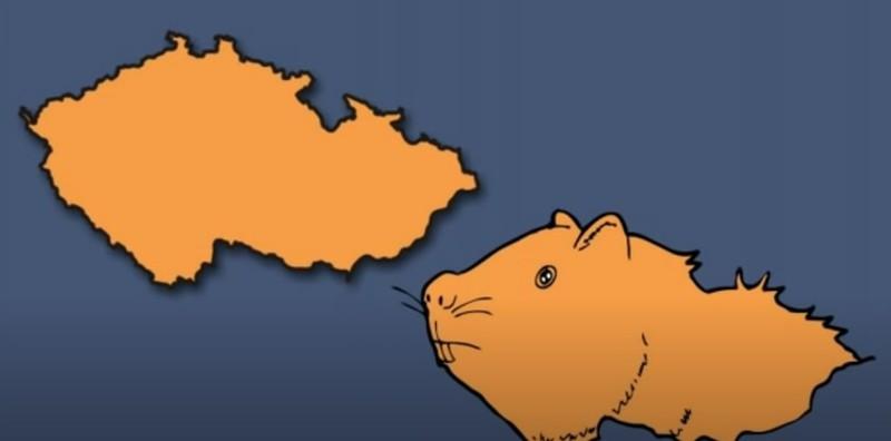 Das europäische Land erinnert an ein Meerschweinchen.