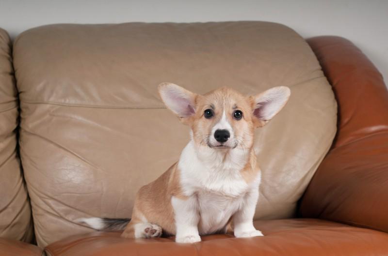 Der Hund seiner Gäste war der blanke Horror, denn er hat ihm auf das Sofa geschissen